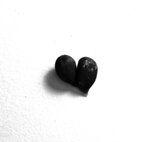 apple seed heart