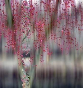 blurry berries